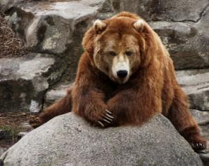 Bear. Big Bear.